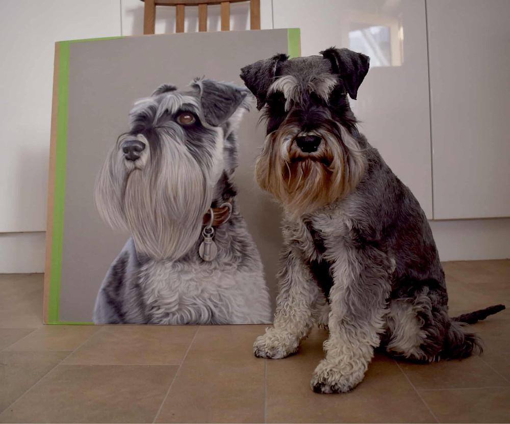 Pastel pet portrait of Miniature Schnauzer
