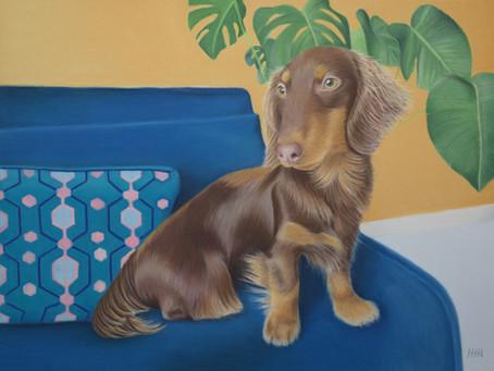 Colourful Pet Portrait UK- A Sausage Dog Portrait with a Colourful Background