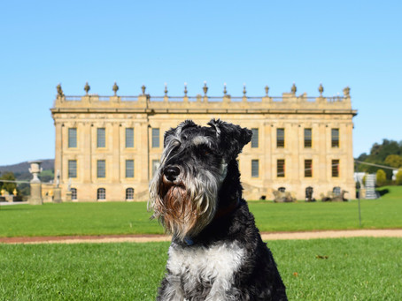 Visiting Chatsworth House in Derbyshire with Your Dog