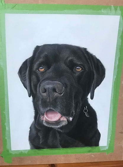Pet portraits from photos in pastel