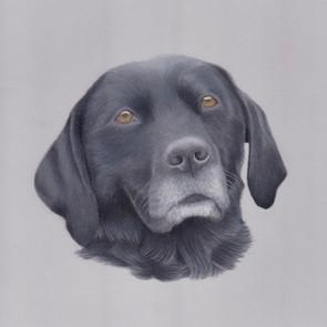 Black Labrador Dog Gundog Coloured pencil Custom pet portrait on pastelmat, realistic artist derbyshire