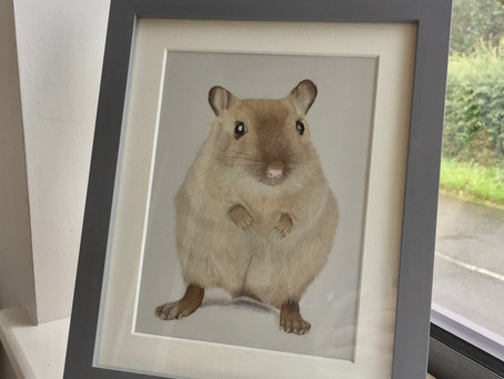 Pet Portraits from Photos- What Size Portrait Should I Commission of My Pet?