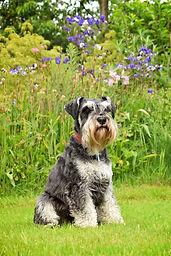 Monty | Amy Elizabeth Fine Art | Pet Portrait Artist