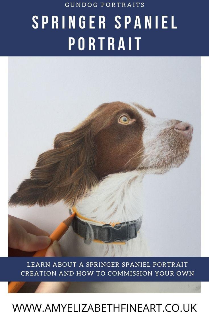 A Springer Spaniel Portrait in Coloured Pencil gundog portrait uk - By Amy Elizabeth Fine Art | Pet Portrait Artist Derbyshire