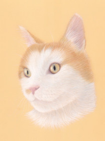 Cat Memorial Pet Portrait in Pastel