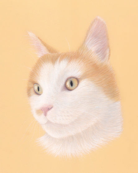 Cat Memorial Pet Portrait in Pastels