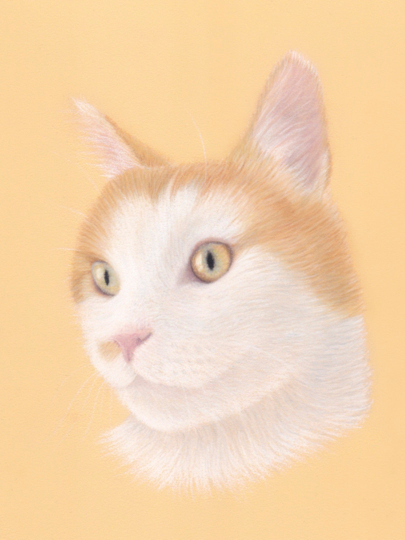 Cat Memorial Pet Portrait in Pastel