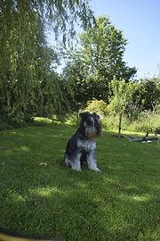 Pet Portrait Commission Reference Photograph Example | Amy Elizabeth Fine Art | Pet Portrait Artist | Derbyshire