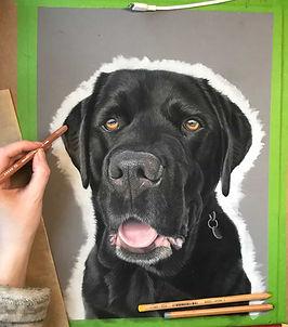 Pastel pet portraits from photos - proce
