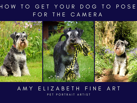 How to Get Your Dog to Pose for Photographs