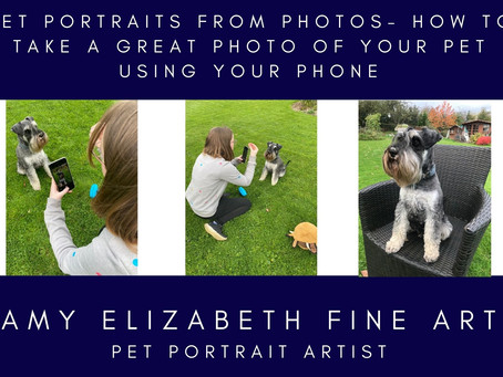 Pet Portraits from Photos- How to take a great photo of your pet, using your phone