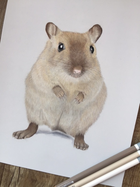 Gerbil drawing with 3 pencils