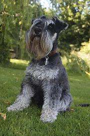 Pet Portrait Commission Reference Photograph Example Dog | Amy Elizabeth Fine Art | Pet Portrait Artist | Derbyshire