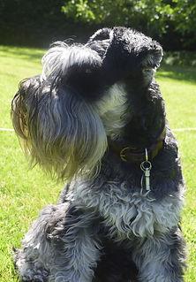 Pet Portrait Commissioned from photograph | Amy Elizabeth Fine Art | Pet Portrait Artist | Derbyshire