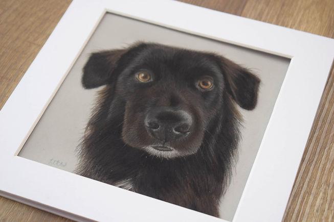 Mini Pet Portraits