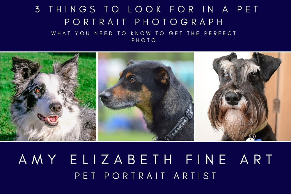 3 things to look for in a pet portrait photograph, what you need to know to get the perfect photo. By Amy Elizabeth Fine Art, Pastel Pet Portrait Artist