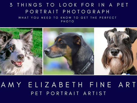 Pet Portraits From Photos- 3 Things to Look For in a Pet Portrait Photograph