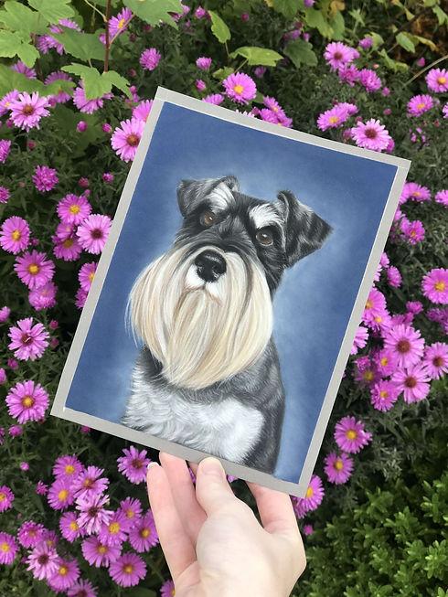 Mini pet portrait - schnauzer