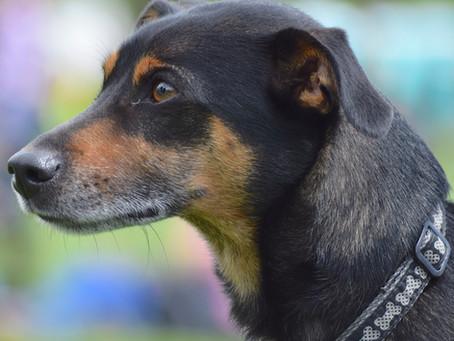 The Life of a Pet Portrait Commission