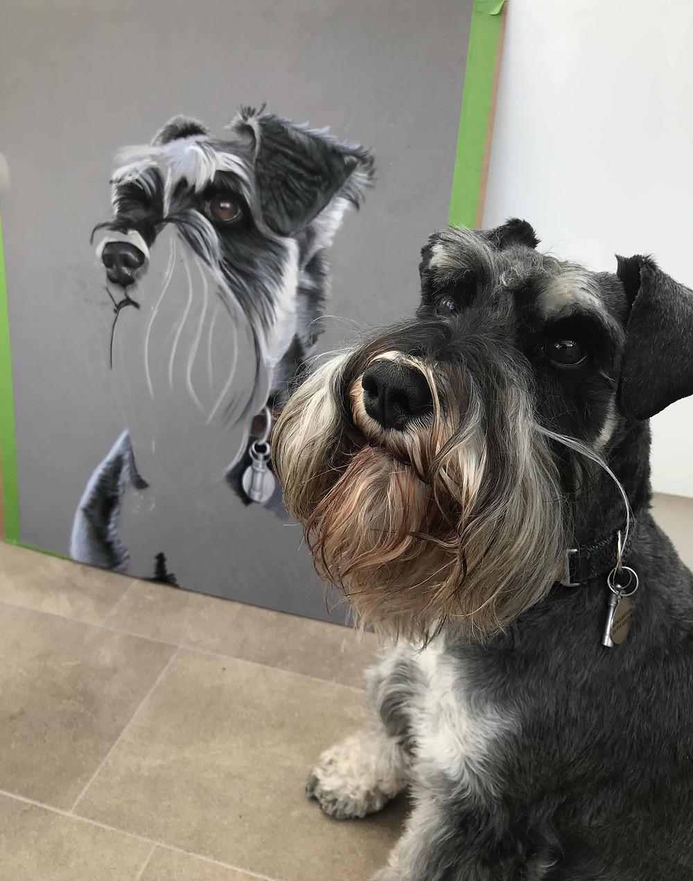 Pastel Portrait of a Schnauzer Dog By Pastel Pet Portrait Artist   Amy Elizabeth Fine Art