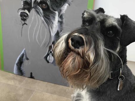Pastel Pet Portrait Artist - Creating Monty's Portrait in Pastels
