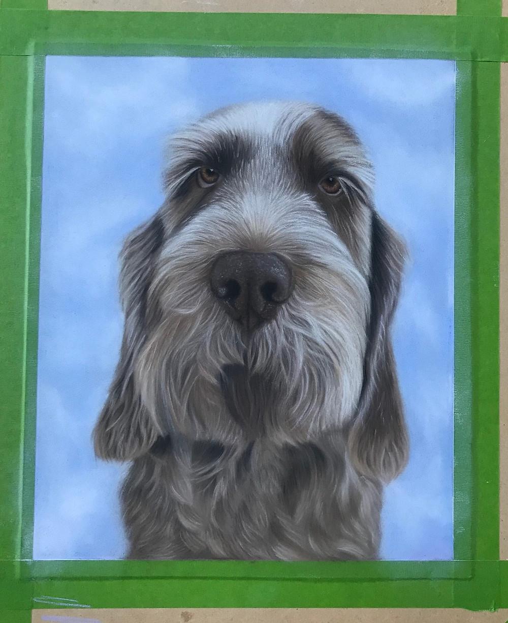 dog portraits - italian spinone