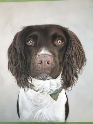 Springer spaniel pastel pet portrait