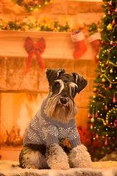 Monty Christmas | Amy Elizabeth Fine Art | Pet Portrait Artist
