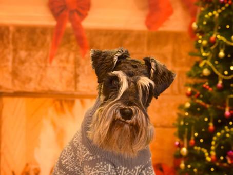 Christmas Pet Portraits - Pet Portraits in Pastels