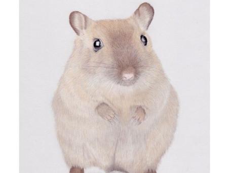 Small Furries Portraits- A Gerbil Portrait in Pastels