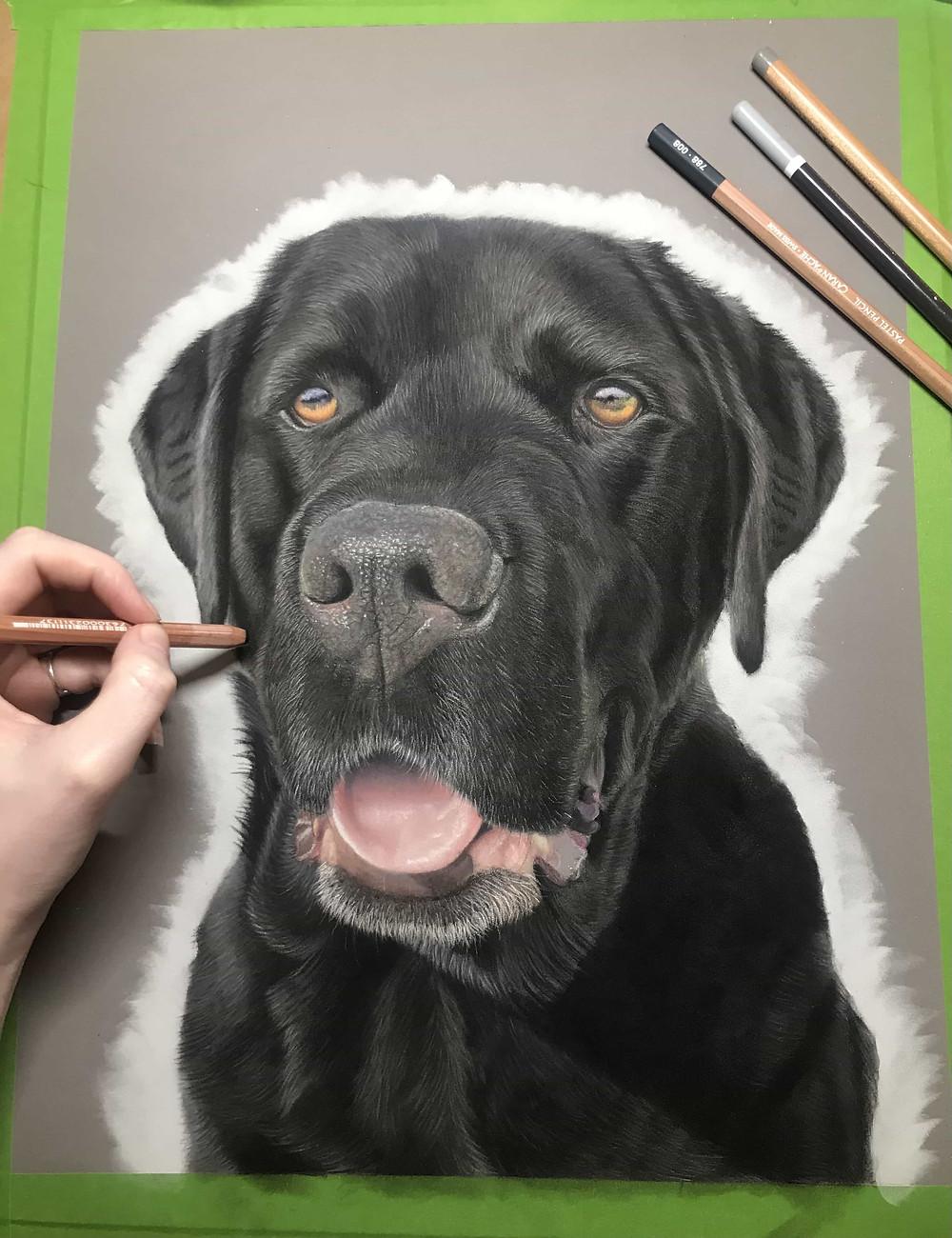 A photo of a pastel pet portrait of a labrador, with pastel pencils around it