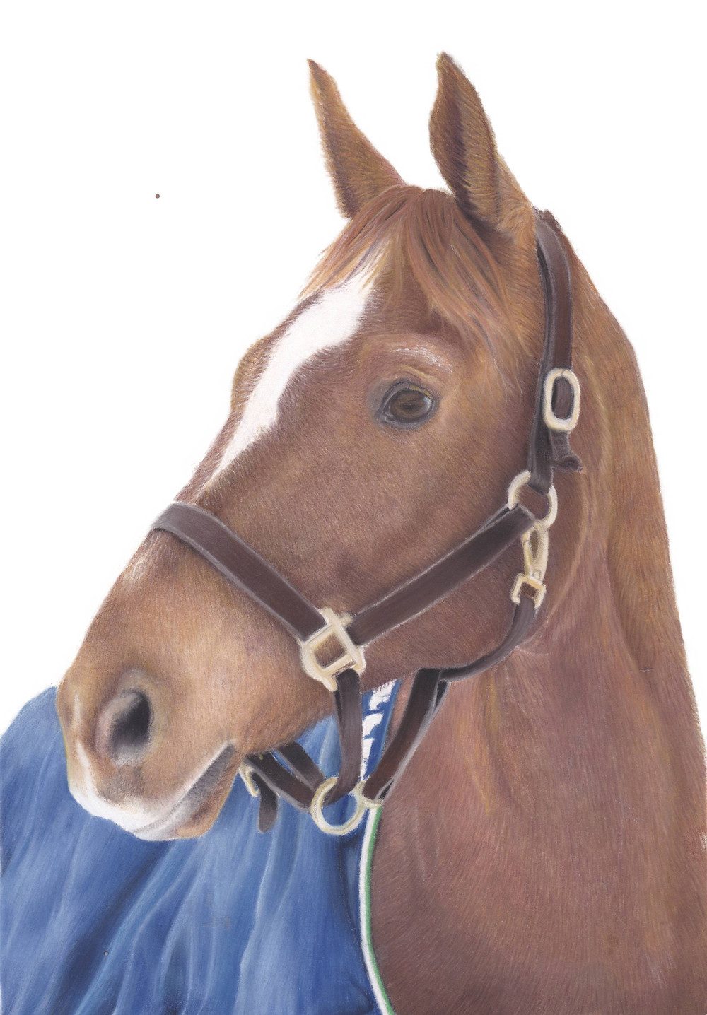A chestnut horse with halter portrait drawing in pastel pencils