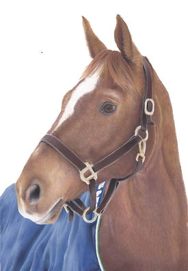 Pastel Pet Portrait of a Horse in Pastel Pencils | Amy Elizabeth Fine Art Pet Portraits