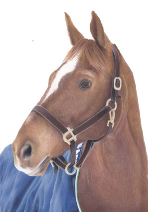 Chestnut Horse Custom Pastel Portrait   Amy Elizabeth Fine Art