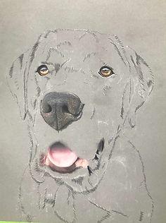 creating a pastel pet portrait
