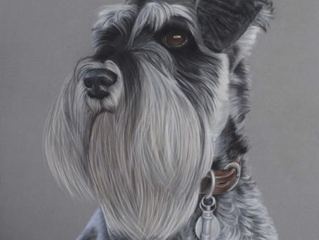 Dog Portraits UK- Some of my most recent dog portraits