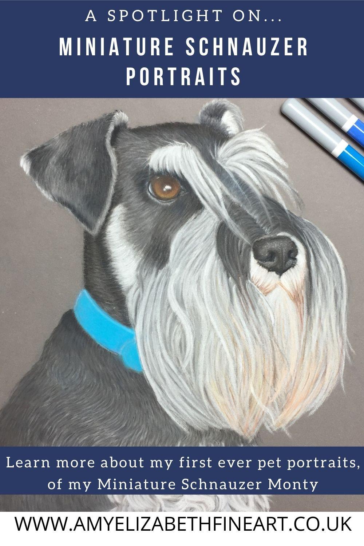 A pastel pet portrait from photos, of a black and silver miniature schnauzer   Pastel pet portraits UK