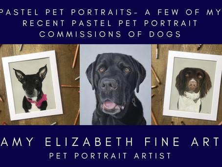 Pastel Pet Portraits - A few of my recent pastel pet portrait commissions of dogs