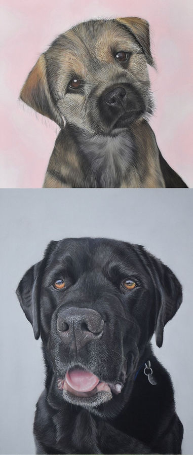 Pastel pet portraits