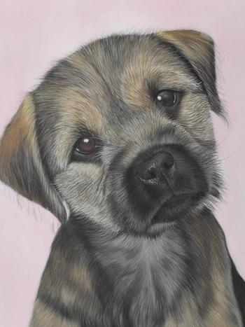Border terrier portrait in pastels