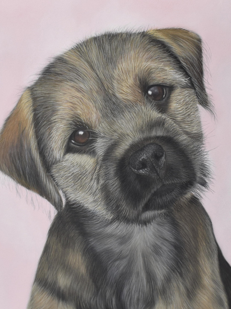 Border terrier portrait in pastels