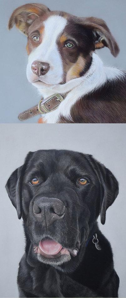Pastel Pet portraits - Amy Elizabeth Fine Art