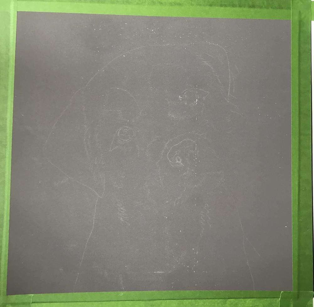 Border Terrier Portrait - initial outline