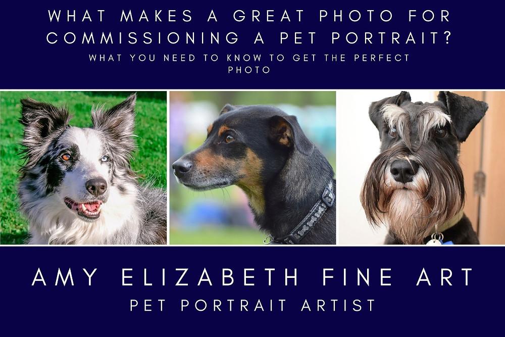 What makes a great photo for commissioning a pet portrait by Amy Elizabeth Fine Art, pet portrait artist based in Derbyshire