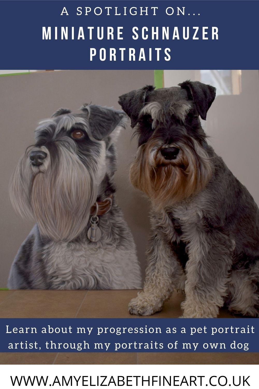 A pastel pet portrait from photos, of a black and silver miniature schnauzer | Pastel pet portraits UK