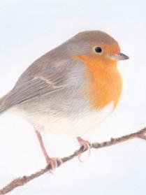 Robin In Pastels.jpg