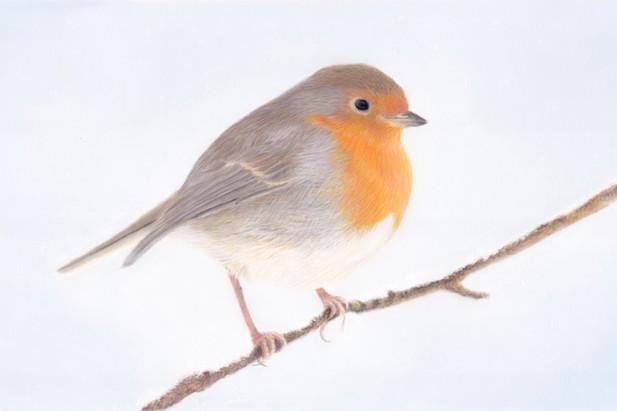 Robin in Pastels