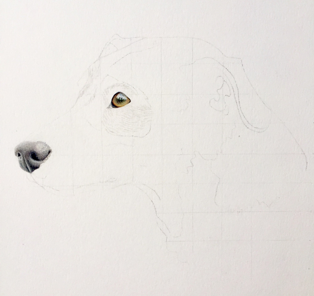 Outline coloured pencil drawing of a dog by Amy Elizabeth Fine Art.
