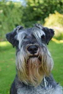 Dog Pet Portrait Commission Reference Photograph Example Photo | Amy Elizabeth Fine Art | Pet Portrait Artist | Derbyshire
