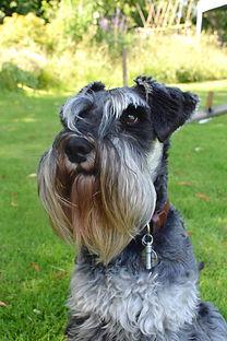 Pet Portrait Art Commission Reference Photograph Example | Amy Elizabeth Fine Art | Pet Portrait Artist | Derbyshire
